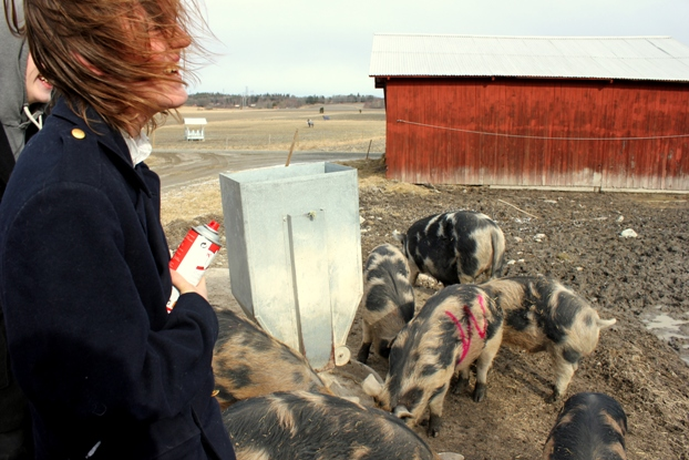 Märkt gris